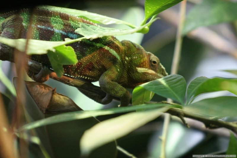 Coluccio_Law_Trucking_Blog_Chameleon_Carrier